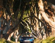 21303 A drive through the Dark Hedges in County Antrim